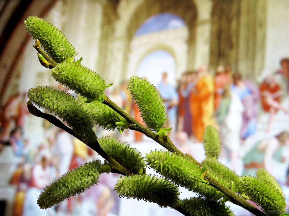 Obiceiuri de Florii – Obiceiul Lazariţelor şi ramurile de salcie